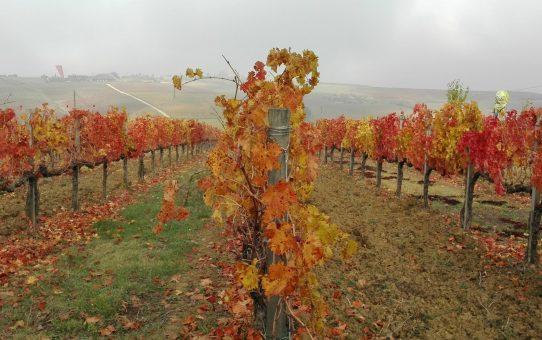 Autunno a Castelbuono, tra le vigne e le sculture